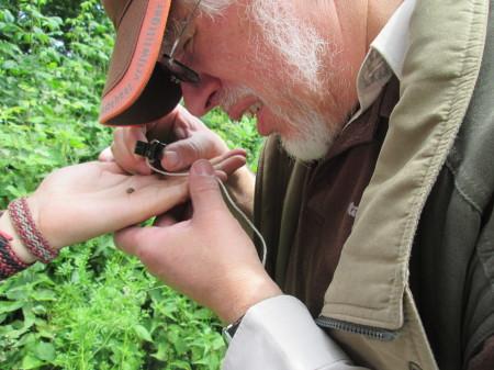 Anthonie van Peursen in actie tijdens de 1000-soortendag 2015