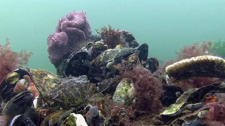 mossels en oester